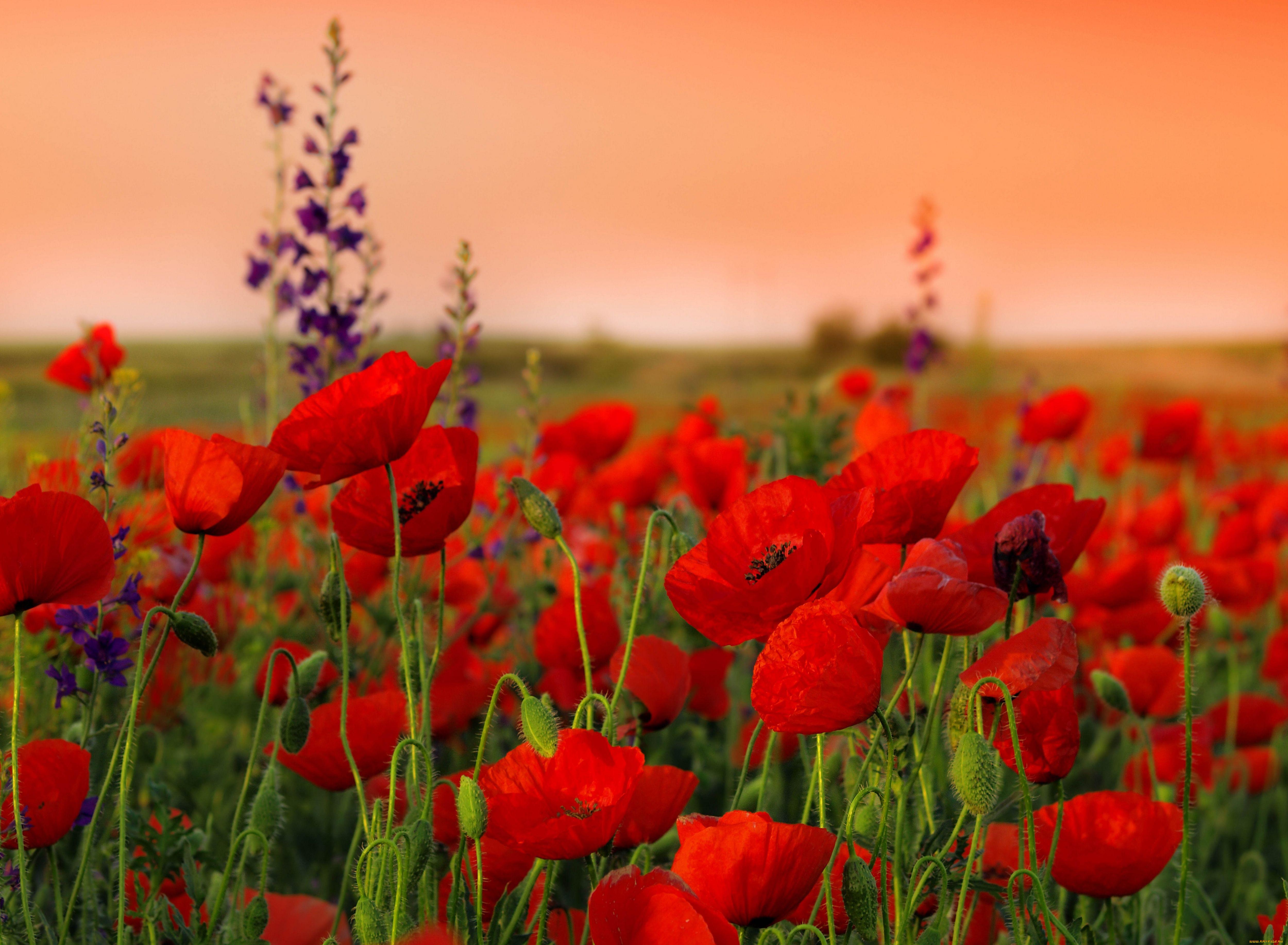фотообои на рабочий стол лето цветы национальный